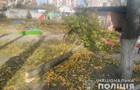 В Кременчуге два ребенка пострадали при падении дерева в детсаду