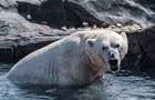 У Тихоокеанській Арктиці зафіксовано перше за 20 років похолодання