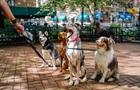 Ученые нашли ближайшего родственника собаки