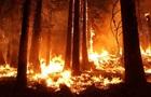 В Сирии казнили 24 поджигателей, начавших лесные пожары
