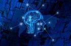 Вчені пояснили зменшення мозку сучасної людини