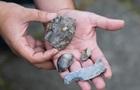 Під Києвом виявлені стародавні поселення людей епохи палеоліту