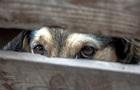 У Франції домовилися прийняти безпрецедентний закон про захист тварин
