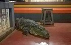 В індійському храмі живе крокодил-вегетаріанець