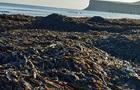 На пляжах Британии нашли тысячи погибших морских обитателей