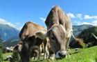 В Австралии предложили сократить скотоводство из-за изменений климата