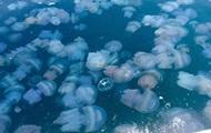 В Крыму полчища медуз превратили море в кисель