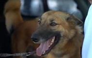 В Таиланде псу сделали высокотехнологичные протезы