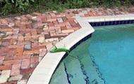 """Во Флориде из-за похолодания начался """"игуанопад"""""""