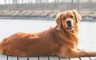В Швейцарии запретили мешать собакам лаять