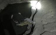 В Петербурге крокодил охранял тайник с оружием – СМИ