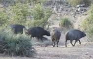 Туристы сняли спасение слоненка стадом буйволов