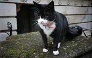 Служебного кота МИД Британии посадили на диету