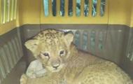 Пограничники опубликовали видео топ-5 контрабанды животных