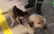 В Сети показали собаку, усыновившую обезьяну