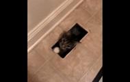 Загадочное появление в доме кота взорвало Сеть