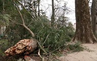 Буря повалила посаженное Вашингтоном дерево