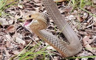 Поимку терроризировавшей семью змеи сняли на видео