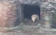 В зоопарке Николаева впервые вывели на прогулку белого медвежонка