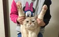 В Японии набирает обороты флешмоб Вытяни кота
