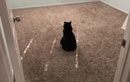 Засмучена самотня кішка зворушила Мережу