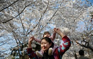 У Китаї розпочався сезон цвітіння вишні