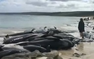 In Australia ashore beached dolphins