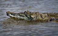 Пограничиники сообщили о крокодилах на службе