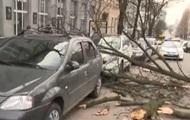 В Киеве дерево повредило два авто