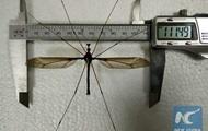 В китайском музее выставят самого большого комара в мире