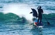 В Сети показали дельфина, столкнувшего серфера с доски