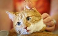 Итальянка завещала полтора миллиона евро коту