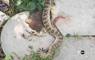 Американца укусила голова убитой им змеи
