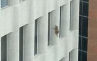 В США енот забрался на 23 этаж небоскреба