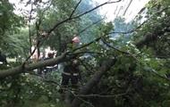 Ураган с ливнем поломал деревья и затопил улицы Черновцов