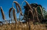 Аграрии намолотили первый миллион тонн зерна