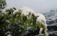 В Карпатах из-за снега эвакуируют детский лагерь