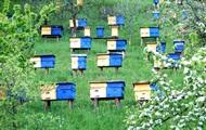 В Сумской области поймали похитителей пчел