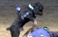 В Испании щенок попытался спасти полицейского