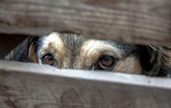 У Миколаєві в Центрі захисту тварин вбили 150 собак