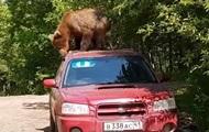 В России медведь попытался проникнуть в салон авто