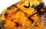 В янтаре нашли детеныша змеи возрастом 100 млн лет - Real estate