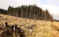 Порошенко ветировал закон против вырубки лесов