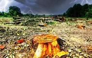 Кто крышует нелегальную вырубку леса