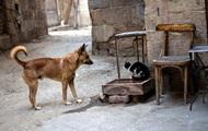 Пес спас кота от драки и стал звездой Сети