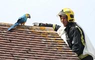 Застрявший на крыше попугай обматерил спасателей