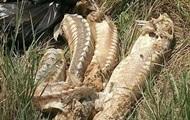 У Криму на берег викинуло десятки мертвих осетрів і дельфінів