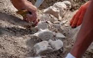 В Крыму нашли скелет древнего кита
