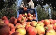 Україна за півроку експортувала агропродукції на ,6 млрд