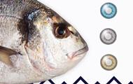 Продавец приклеил рыбам линзы и остался без бизнеса